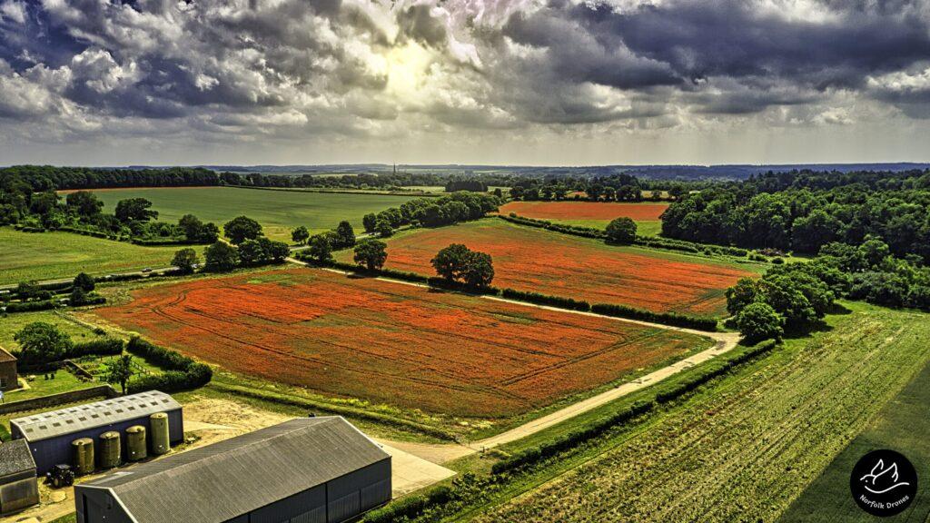 Heacham Poppy Fields Norfolk