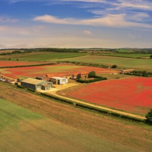 Poppy Field Norfolk Drone